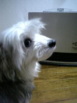 寒がりな犬3.JPG